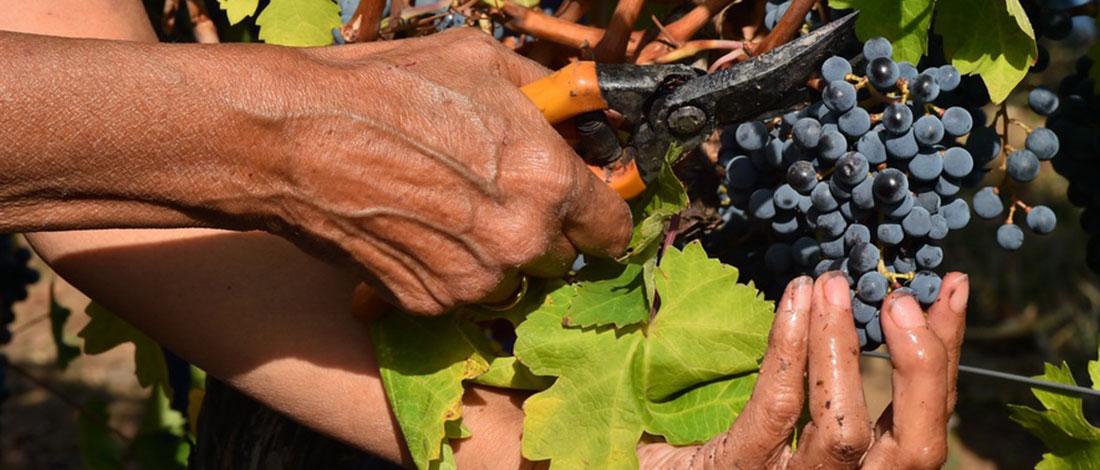 Temet vinarija - tradicija-nije-u-nama-tradicija-je-u-zemlji